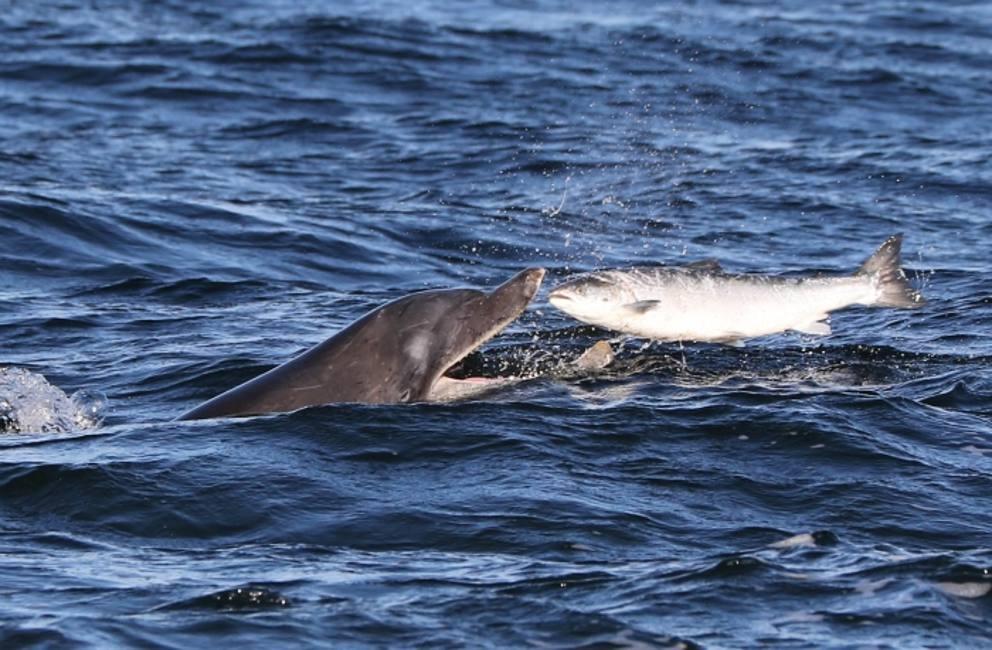 Delfino mangia salmone i due animali stavano giocando - Cosa mangia un cucciolo di talpa ...