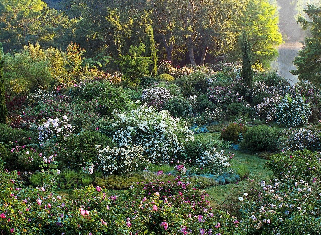 In nome della rosa 33 roseti italiani da sogno for Giardini inglesi