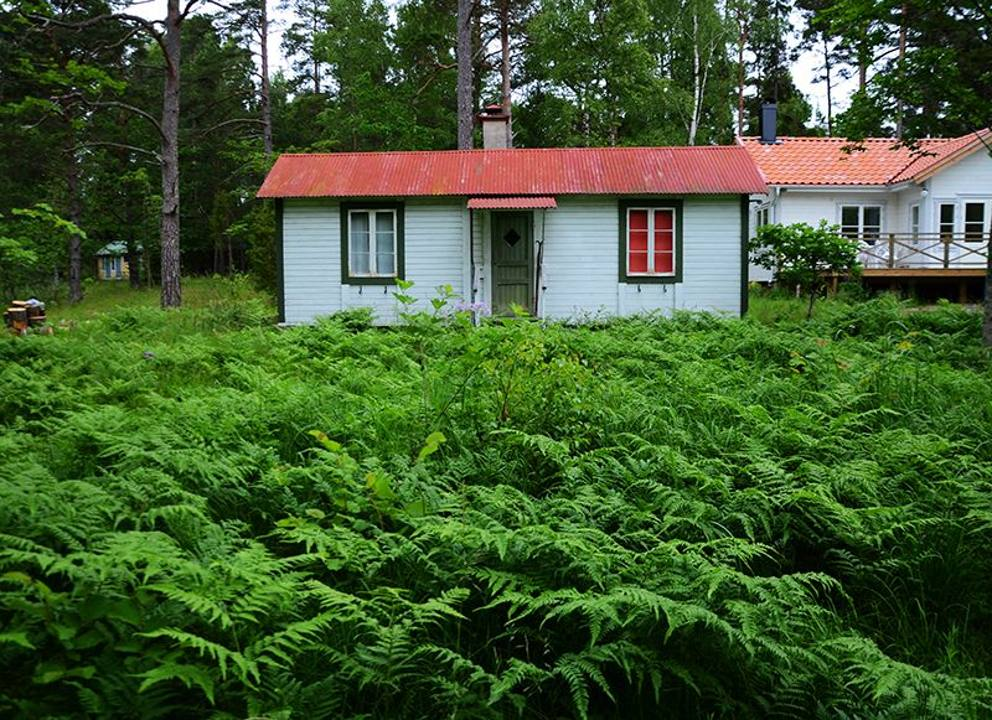 Le farfalle gli scarabei gli anemoninella casa blu di for Foto di decorazione della casa del cottage