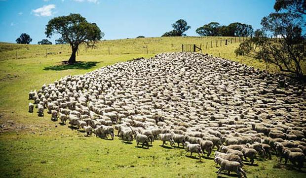 QuaronaUna rete di successi ottenuti sul filo di lana (finissima)