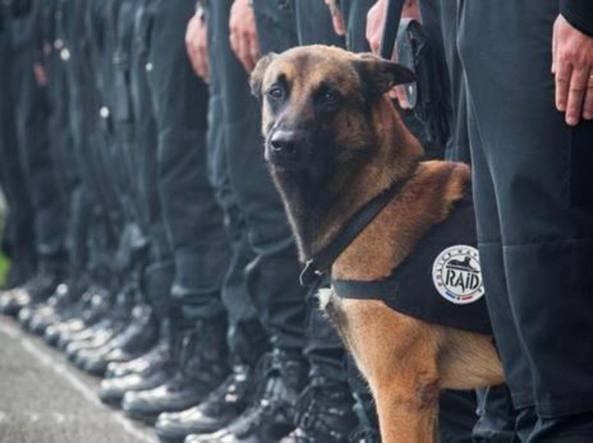 La foto postata dalla Polizia francese (Twitter)