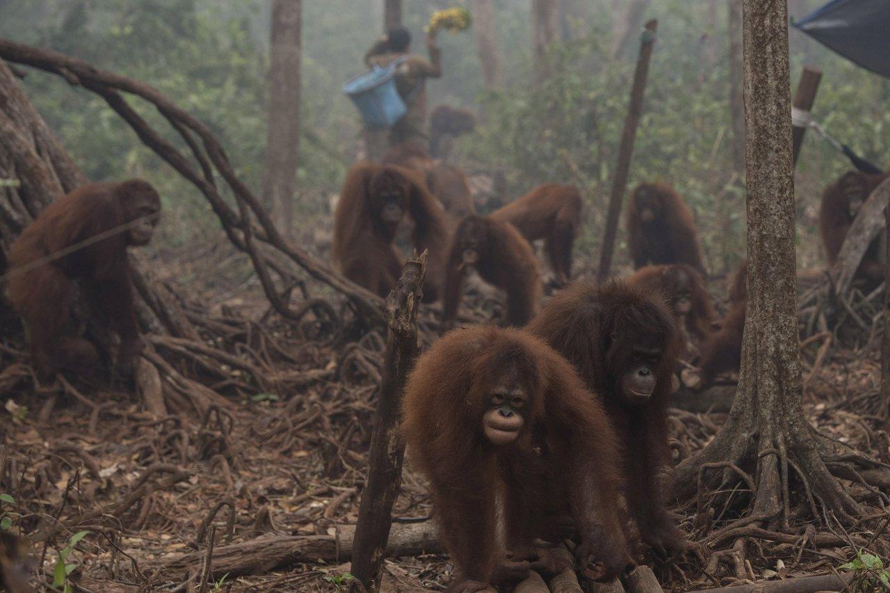 Risultati immagini per animali morti olio di palma