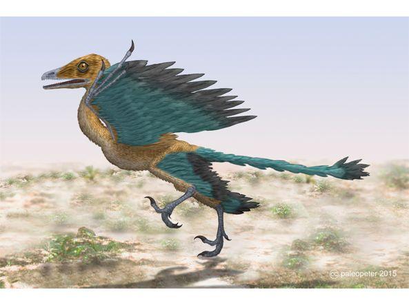 Ricostruzione di un Archaeopteryx (Flickr/Peter Montgomery)