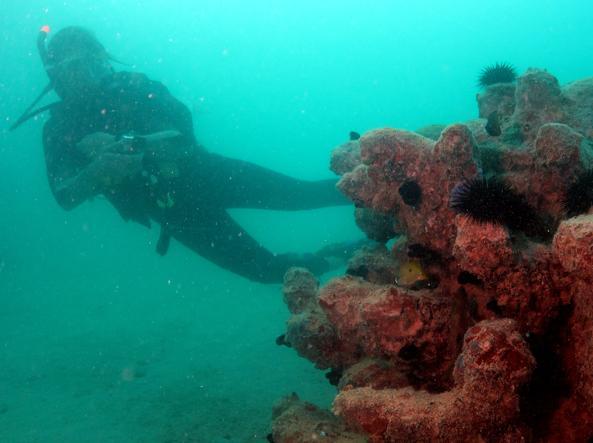 L'ingegnere toscano Enrico Dini mentre si inabissa fino a toccare una vera barriera corallina
