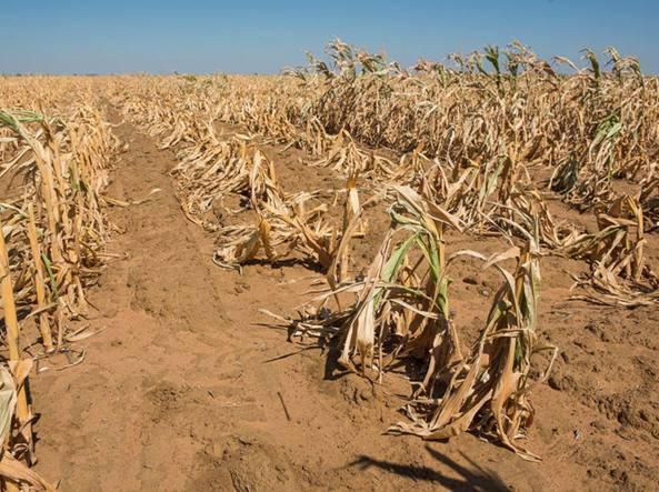 Eventi climatici estremi hanno fatto diminuire del 10% la produzione mondiale di cereali in quasi 45 anni