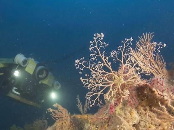 La campagna sottomarina nello stretto di Sicilia (Ispra)