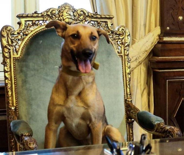 Argentina: Macri fa sedere il suo cane sulla sedia del..