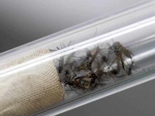 Aedes Aegypti (Epa)