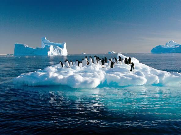 Un gruppo di pinguini Adelia in Antartide (Afp)