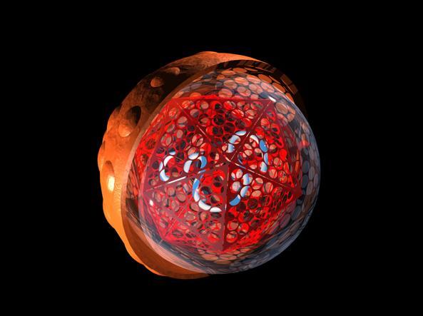 Virus epatite C