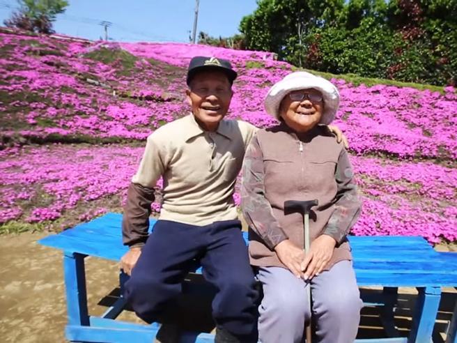 Giappone, un'enorme distesa di fiori da far annusare alla moglie cieca