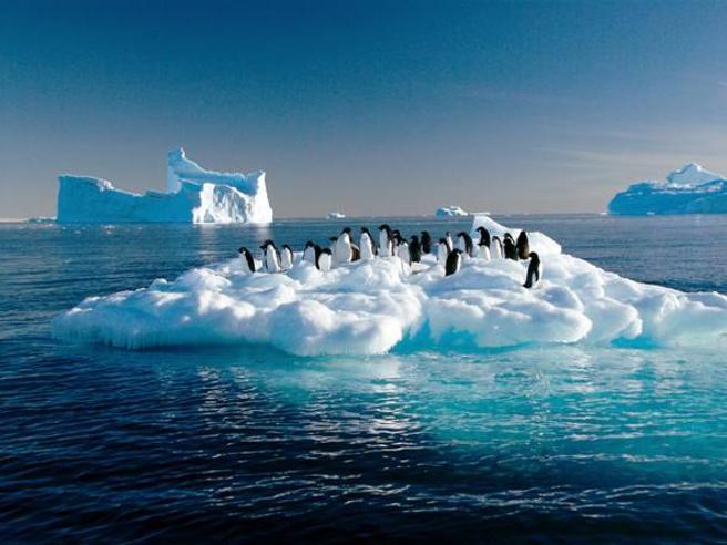 Antartide, i 150 mila pinguini?Non sono morti, sono migrati