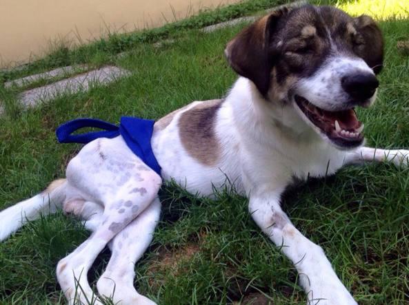 Una foto di Lorenza poco dopo l'incidente (Rifugio del cane di Pistoia)