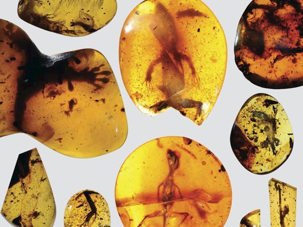 Il camaleonte è quello in basso a destra (Reuters/David Grimaldi/Florida Museum of Natural History)