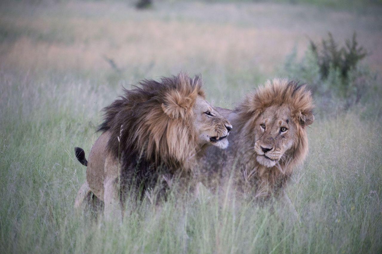Wild african safari sex orgy - 4 2