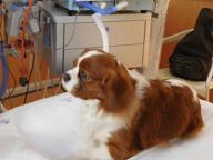 I cani entrano in Terapia intensiva  E i malati stanno meglio