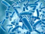 Super batterio resiste a tutti gli antibiotici, colpita donna negli Usa