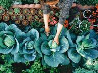 Coltivare l'orto, trucco (efficace) per combattere solitudine e depressione