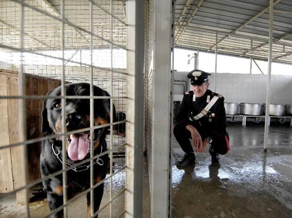 Prato,13enne aggredita da 3 cani: grave
