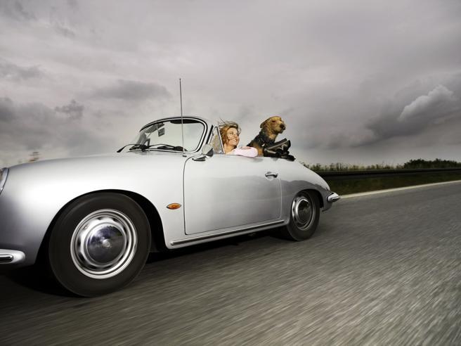 In auto con il cane, 10 consigli per il viaggio