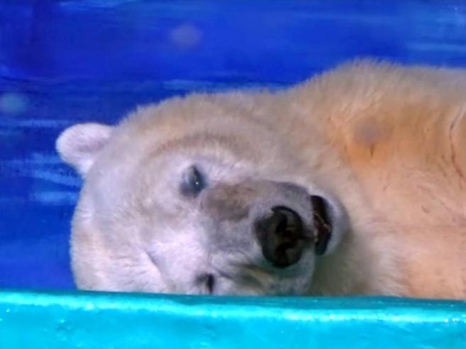 Perché quest'orso è così triste