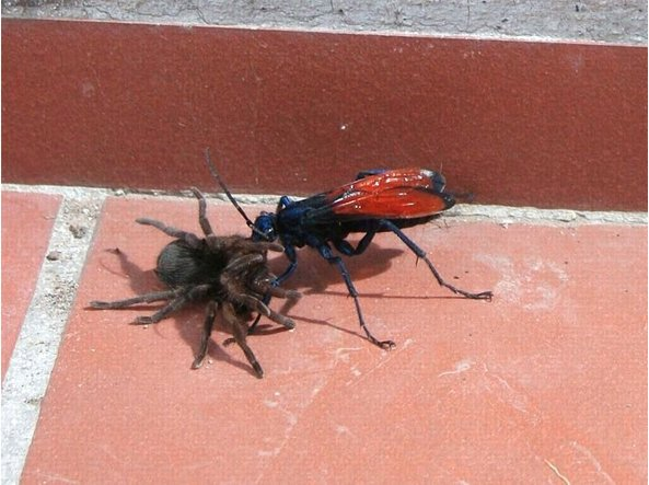 Le punture d'insetto più dolorose (secondo lo scienziato che le ha ...