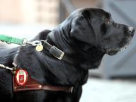 Rimini, hotel rifiuta prenotazione a signora non vedente con il cane guida: «Il nostro albergo è pet free»