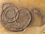 In un fossile la tripla «abbuffata» preistorica di 48 milioni di anni fa