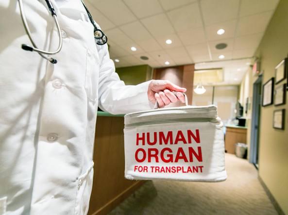 Trapianto rene da donatore anziano L'organo è stato
