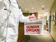 Trapianto rene da donatore anziano L'organo è stato «ringiovanito»