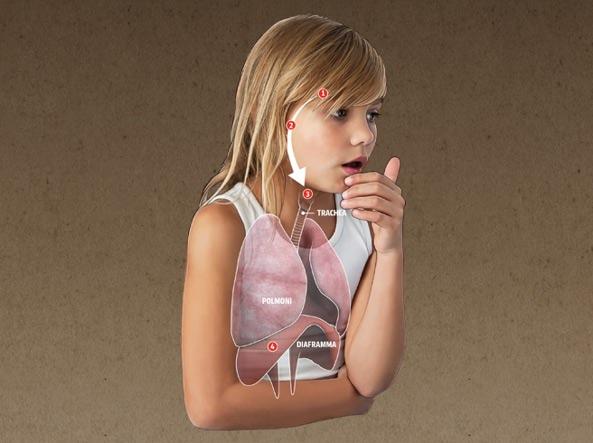 Il meccanismo della tosse interessa: ipotalamo (1), nervo vago (2), glottide (3), diaframma (4). Si tratta di un complesso fenomeno neuromuscolare, perfettamente sincronizzato (illustrazione di Mirco Tangherlini)