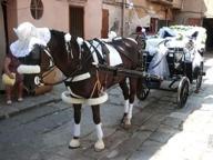 L'ultima corsa del cavallo Mister X, collassato in strada per la fatica