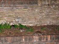 Castel Sant'Angelo infestato dai topi:«Ma li cacceremo con gli ultrasuoni»
