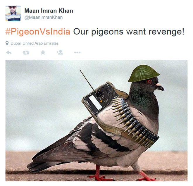Il piccione spia sui social for Trappola piccioni