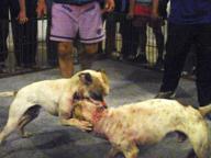 Cane seviziato e ucciso, taglia da 10 mila euro sugli autori delle torture