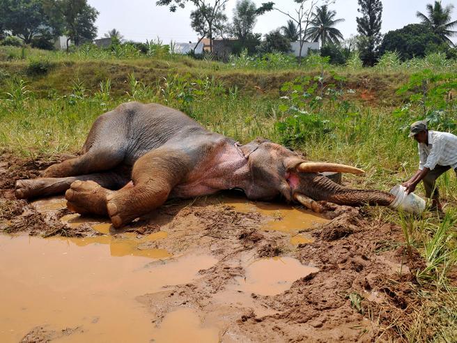 Ambiente: dal 1970 sparito il 60% degli animali selvatici del pianeta
