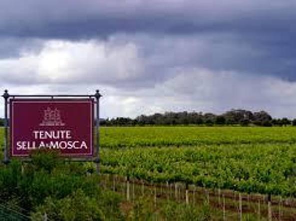 Campari: con 2 cessioni esce dai vini fermi italiani