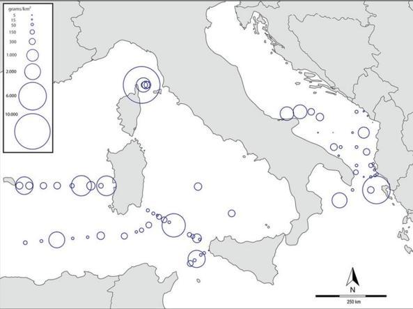 Le zone con le maggiori concentrazioni (Guerrini/Cnr)