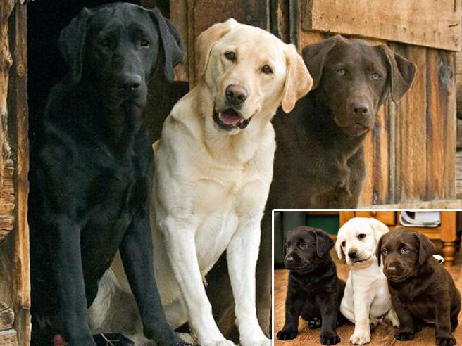 Da cuccioli a giganti: animali fotografati da piccoli e da adulti. Sempre insieme