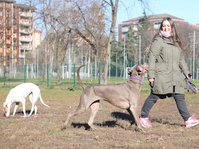 Varese, preso  Dna dei cani per multare i padroni maleducati