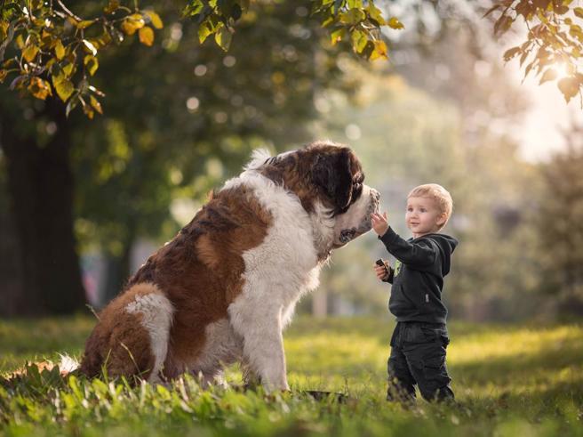 Bambini piccoli e cani giganteschi: una storia di gioia e fiducia. Le foto