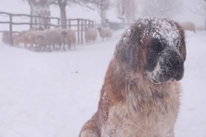 Risultati immagini per animali terremotati al gelo