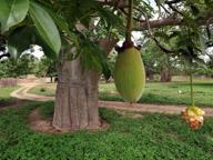 Dai frutti del baobab alle larve  Chi vuole mangiarli sarà più tutelato