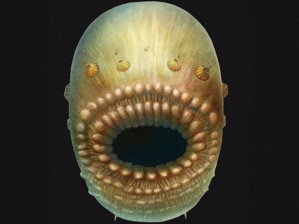 Ricostruzione di «Saccorhytus coronarius» (Jian Han/Reuters)