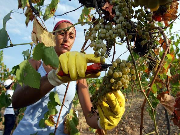 Rapporto Ismea-Svimez: l'agricoltura al Sud è giovane e batte il Nord