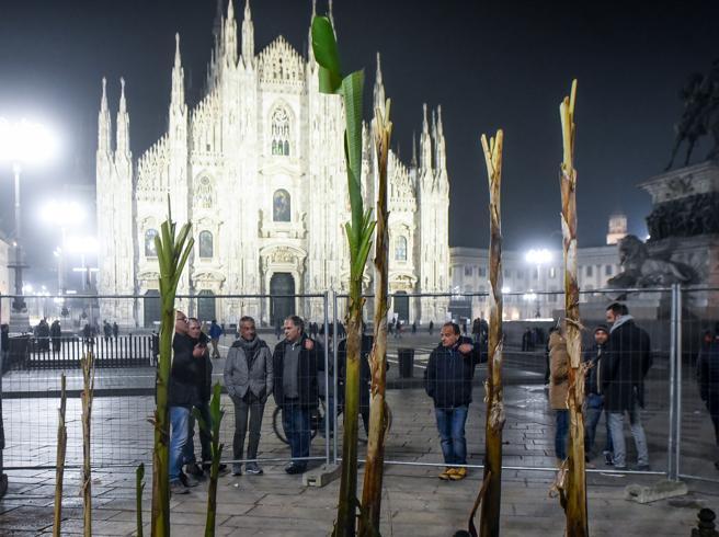 Milano, dopo le palme i banani all'ombra del Duomo