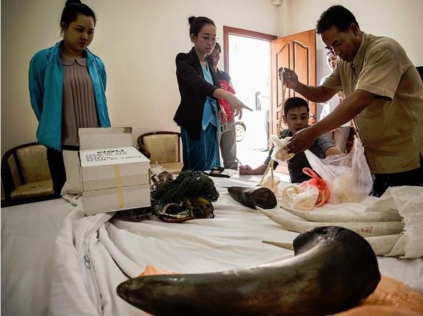 L'arresto di una trafficante trovata in possesso di corni di rinoceronte e avorio