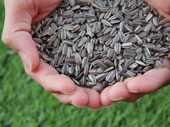 Ferro, calcio, vitamine e Omega 3: semi e bacche sono preziosi per la salute (ma attenti alle calorie)