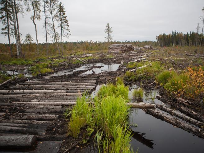 L'allarme di Greenpeace: le ultime foreste europee a rischio Le foto