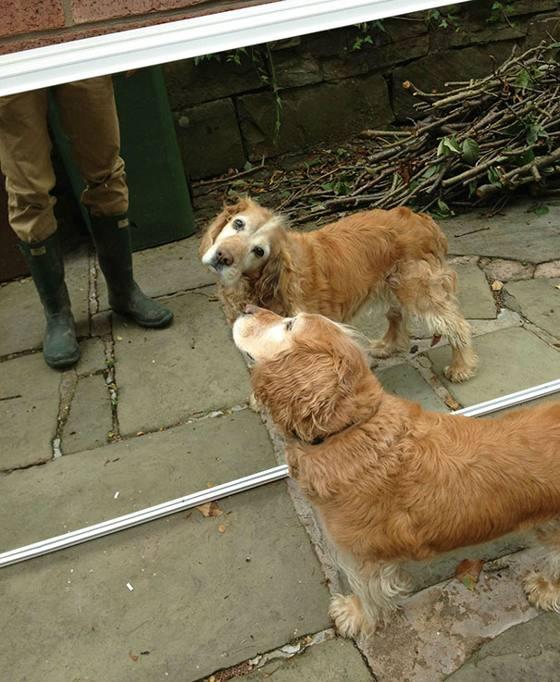 Il cane in metropolitana il gatto e l anguria le incredibili reazioni degli animali alla loro - Cane allo specchio ...
